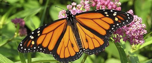 Butterfly Garden Dedication
