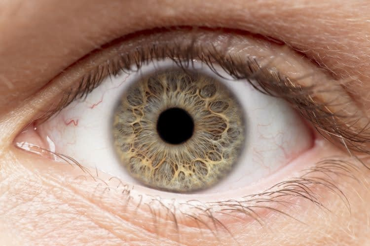 Cornea Update: Corneal Dystrophies & Related Conditions with an Update on Genetic Assessment and Treatment