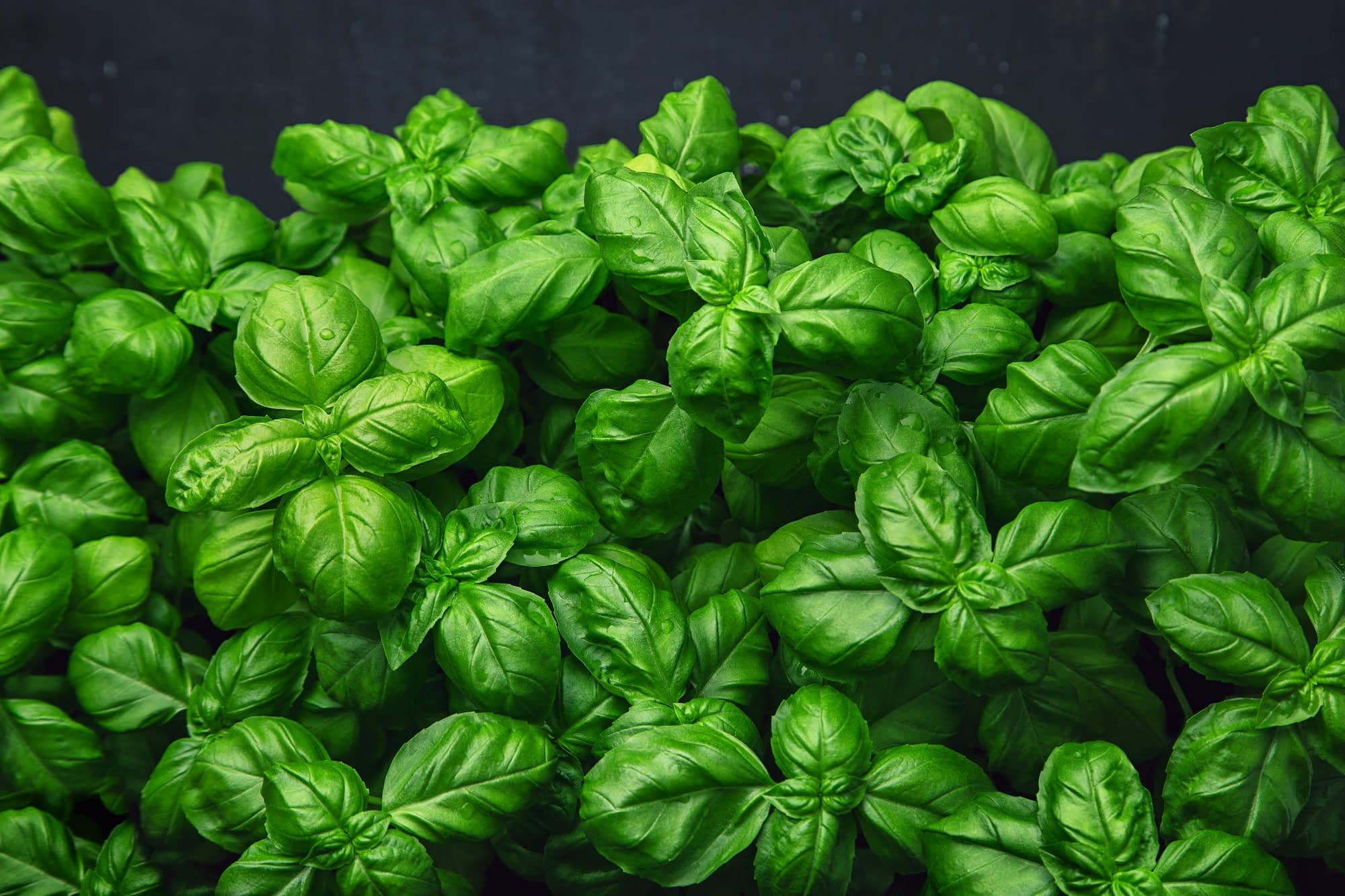 Accent On - Basil