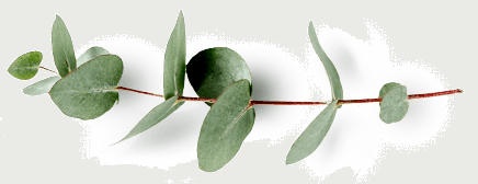 A branch of bay leaves
