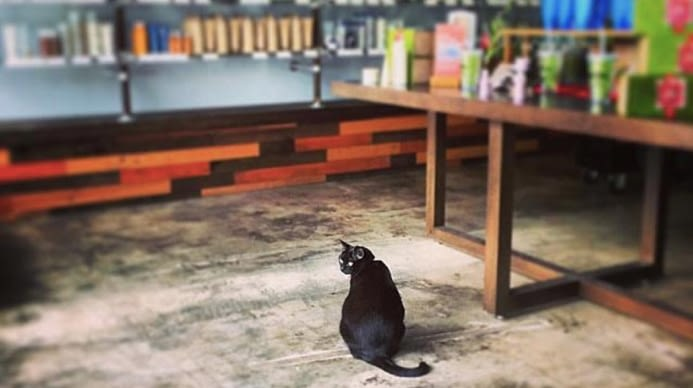 A black cat sitting on the floor or a salon