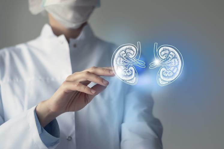 Unrecognizable doctor caring highlighted blue handrawn  Kidneys. Medical illustration, template, science mockup.