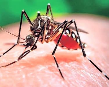 """New Finding on """"Myocarditis, Heart Failure and Arrhythmias in Patients with Zika"""" presented at The American College of Cardiology"""