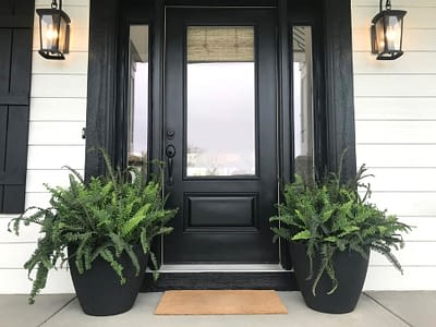 Black Front Door With Two Large Ferns