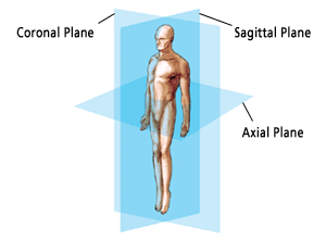 anatomical planes of the body